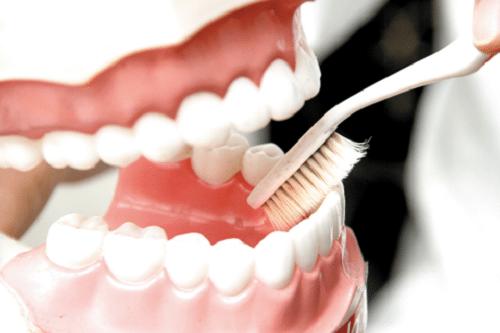 Sử dụng bàn chải lông mềm để vệ sinh hàm giả tháo lắp